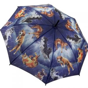 It's Raining Cats & Dogs