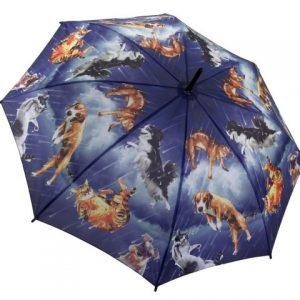 It's Raining Cats & Dogs
